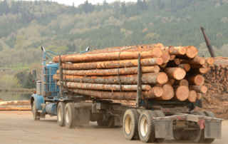 illegal-logging-gps