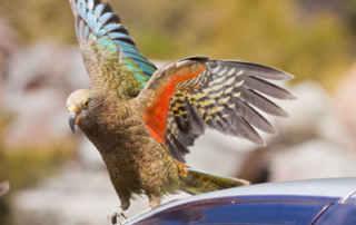 gps tracker birds and animals